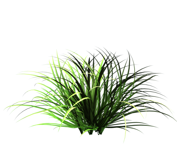 patch_of_wild_grass_accents_by_madetobeunique-d485bsm.png