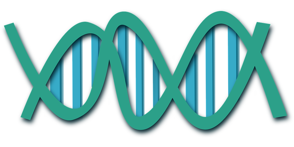 dna-308919_960_720.png