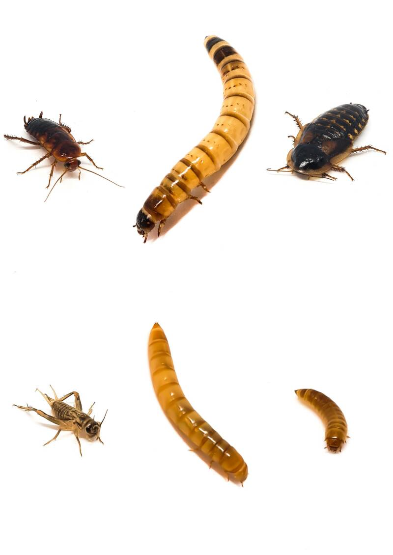 New: insect package