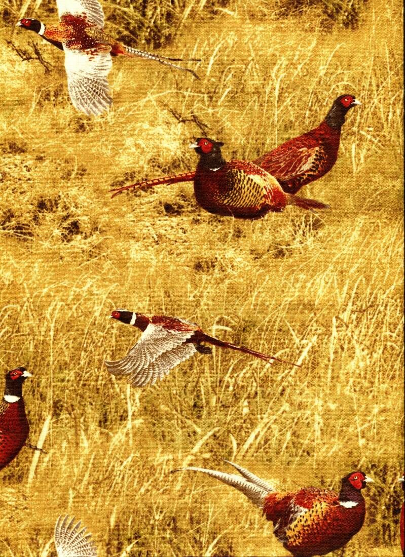 Animals Treasures Pheasants in grass