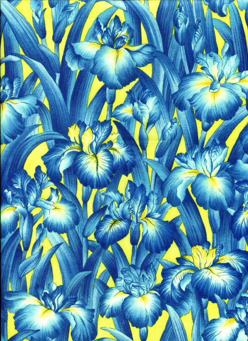 Flowers Irises blue on yellow