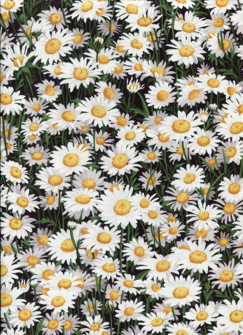 Flowers daisies all over