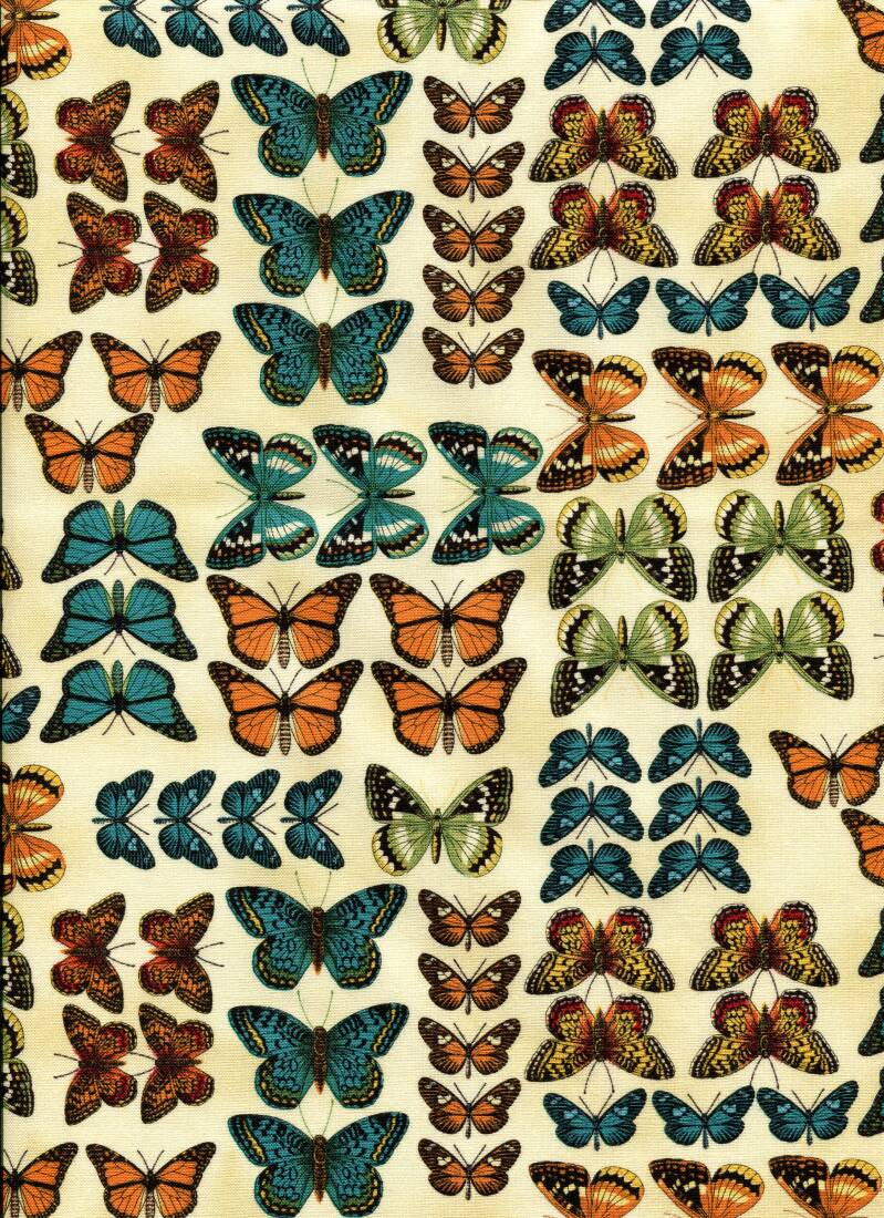 Insects butterflies all over