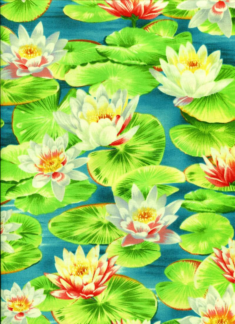 Nature Waterlillies all over