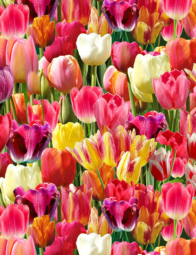Flowers Tulips-NATURE-C6711-Bright