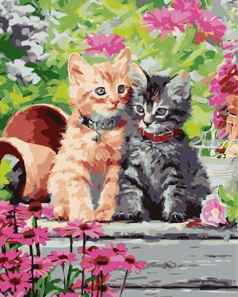 Painting By Numbers Set Kittens 7203
