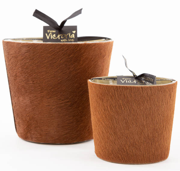 Victoria With Love Hairy-Light-Brown Small-Medium-Extra Large
