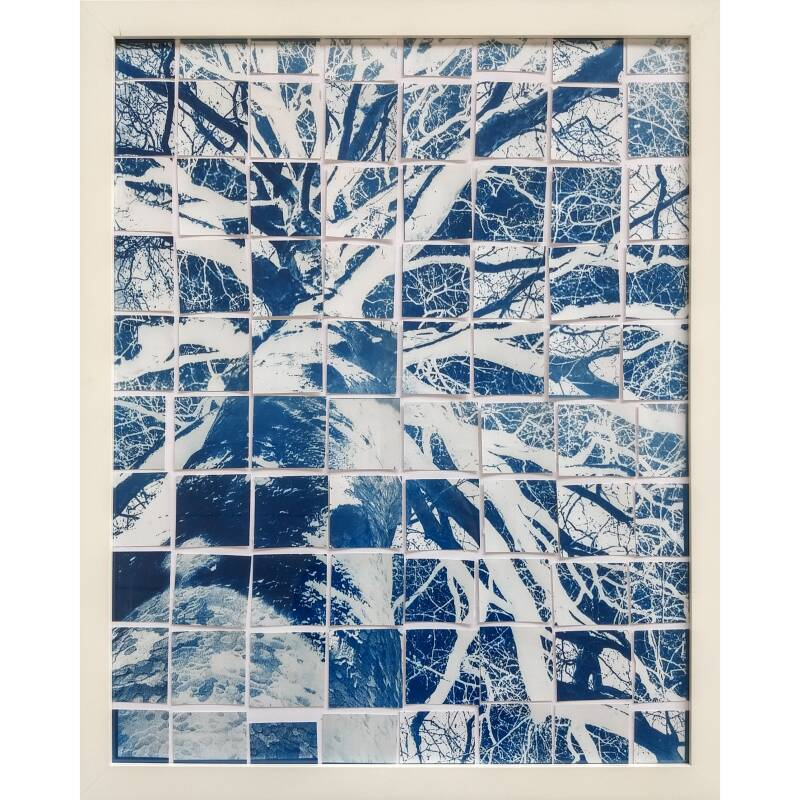 Tree dimension 40x50 Cyanotype