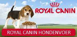 royal-canin-hond1-1.png
