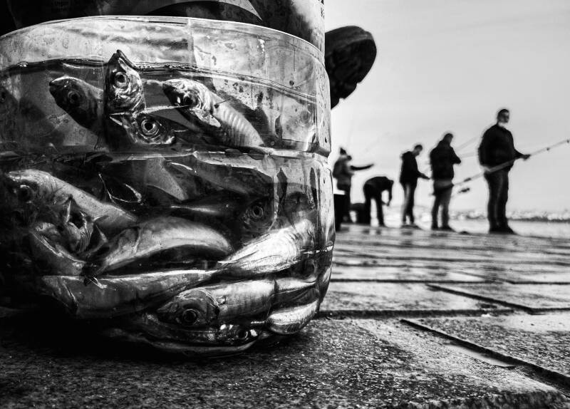 FISHES AND FISHERMEN