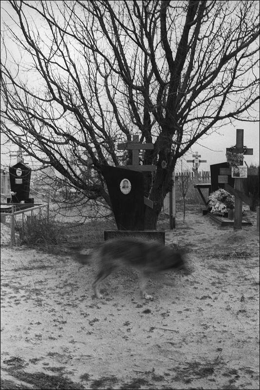 Local dog on a local cemetery