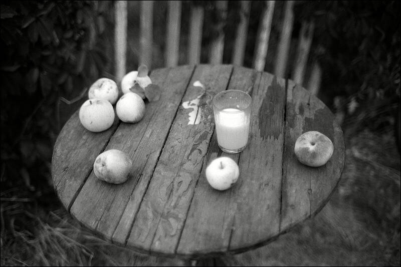 Sunset still life with the poured milk and seven failen apples