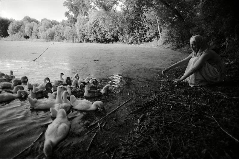 The girl with the geese