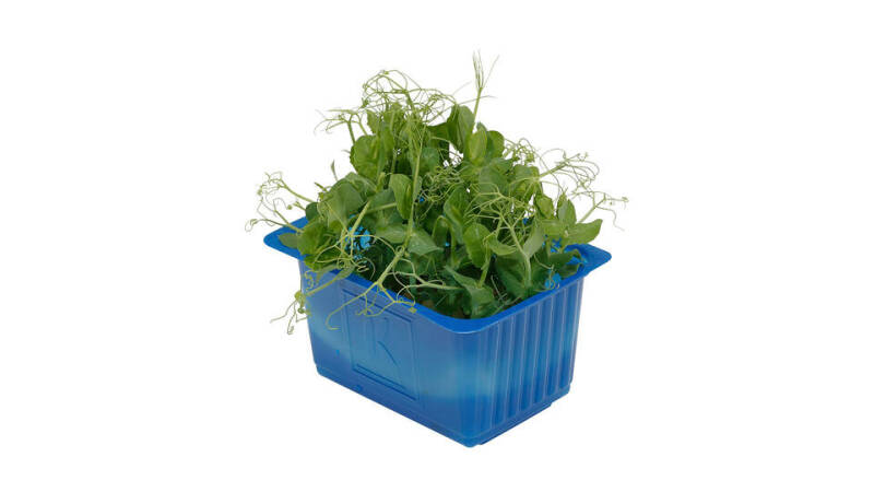 Affilla Cress® - Koppert