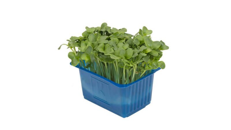 Daikon Cress - Koppert