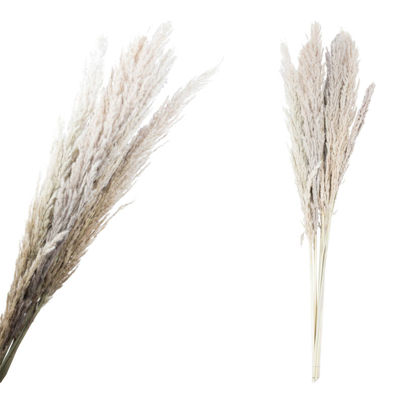 Dried Flower natural bunch pampas grass