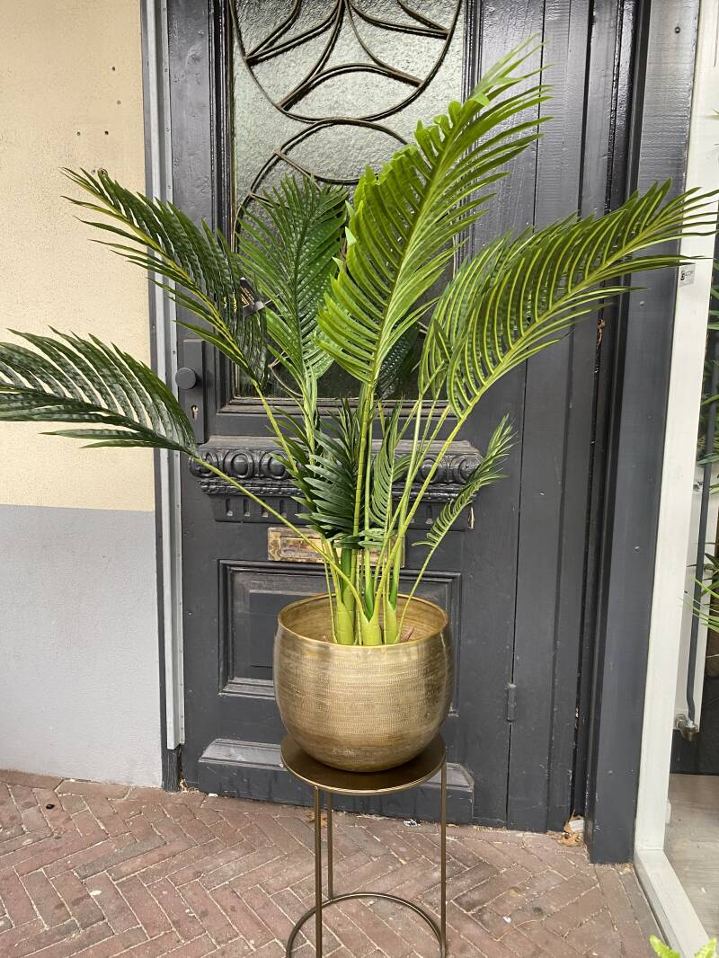 Tree Green palm leaves tree. Prijs met pot is 164,90