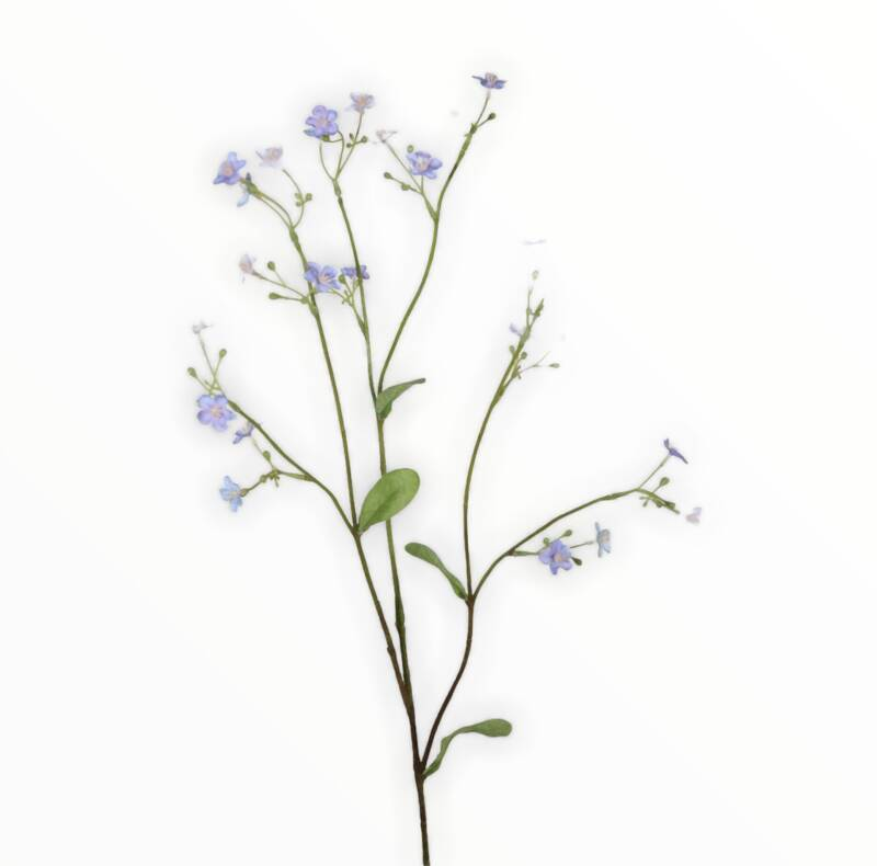 Forget Me Not 73cm
