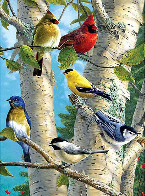 Vogels in boom