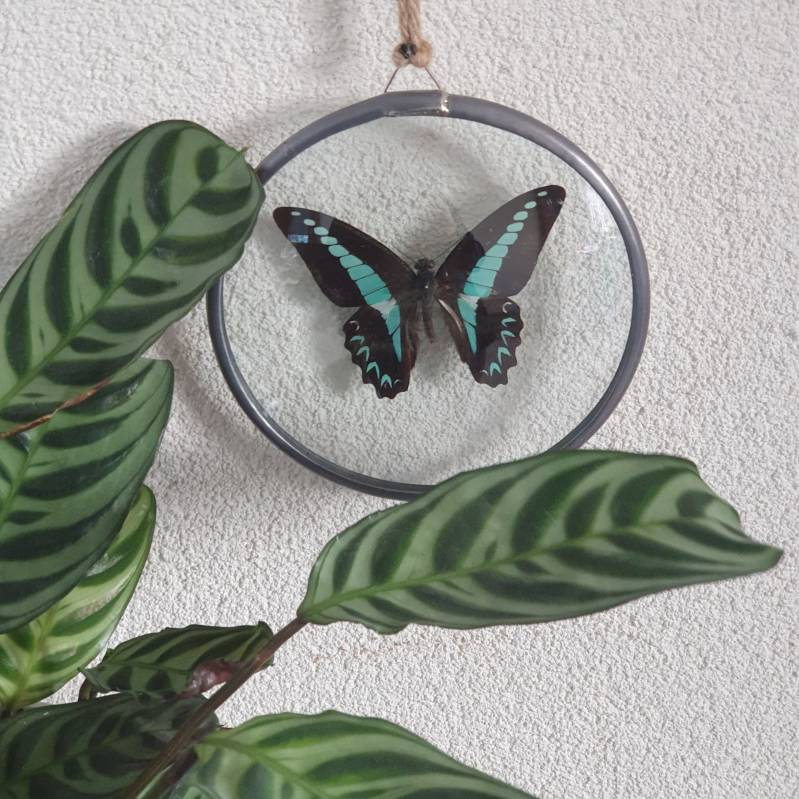 Graphium Milson in Glas in lood medaillon