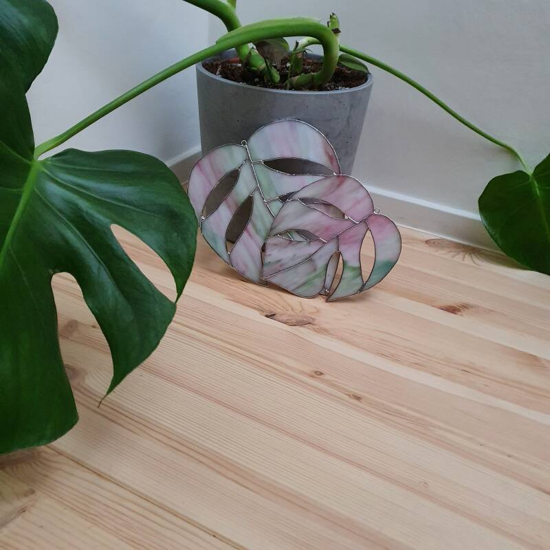 Monstera variegata - pink/green - limited