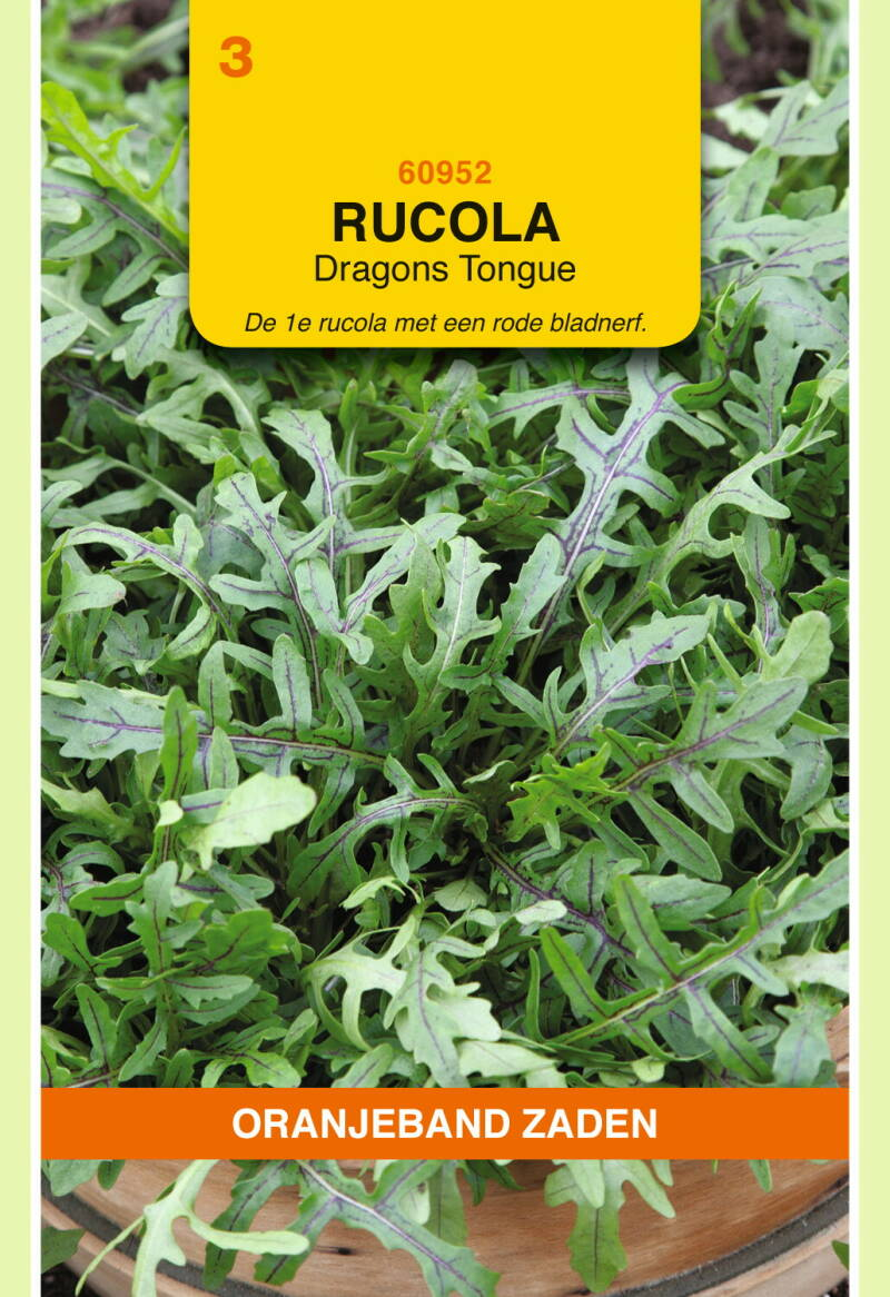 Rucola (Dragons Tongue) 60952