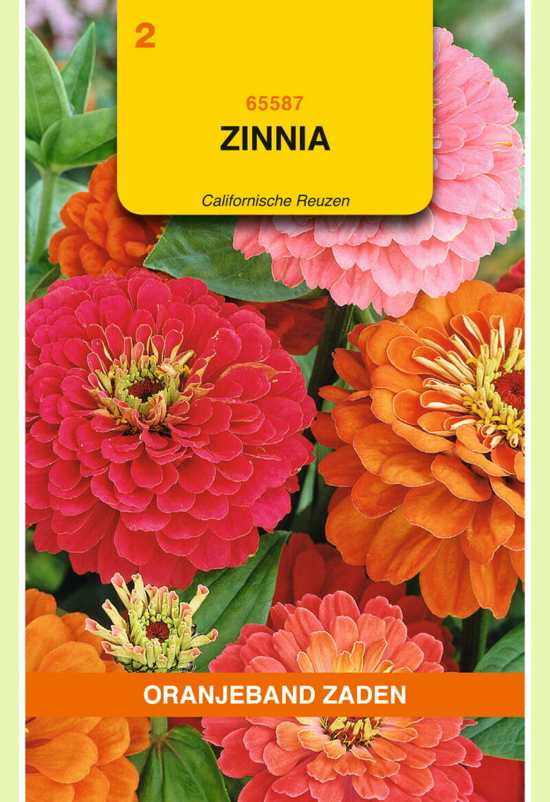 Zinna (Californische Reuzen) 65587