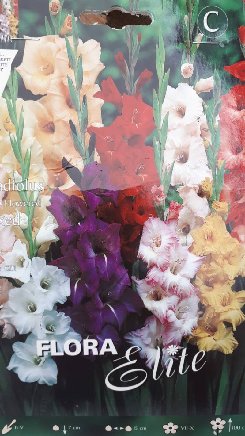 Bloembollen 'Gladiolus Mixed'