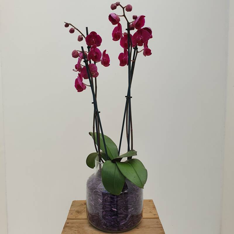 "Orchid in vase ""Purple"""