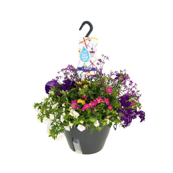 hanging basket, festival colours