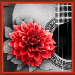 Flower and Guitar