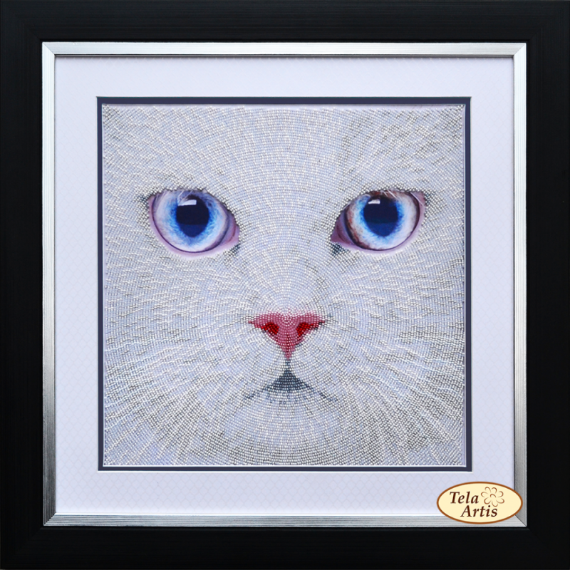 Witte poes