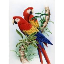 The Red Macaws