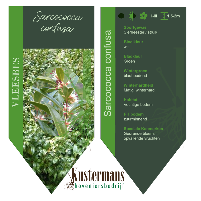 Sarcococca Confusa / Vleesbes