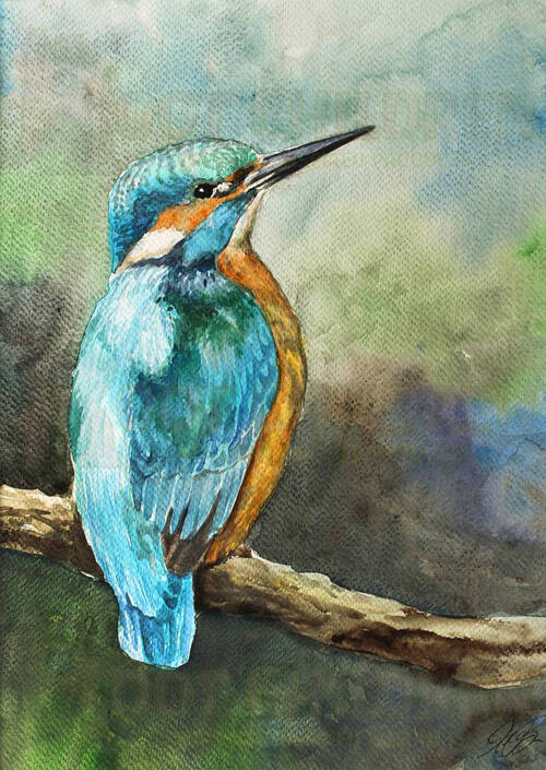 Card - Kingfisher