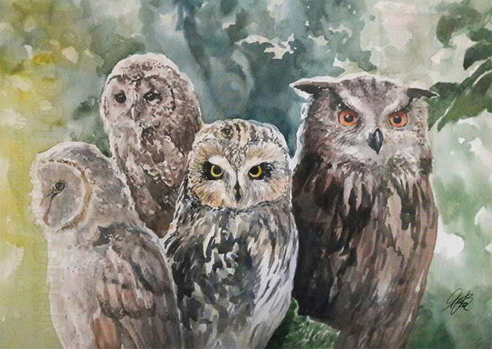 Original - Owl Species