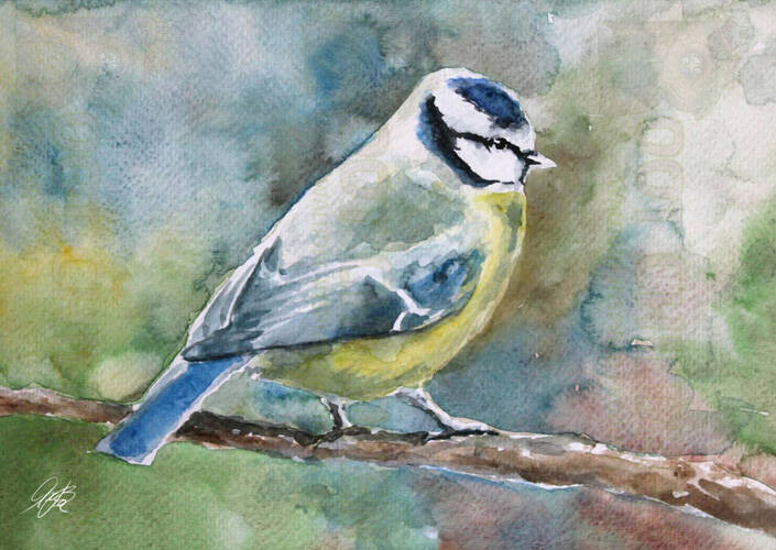 Card - Blue Tit