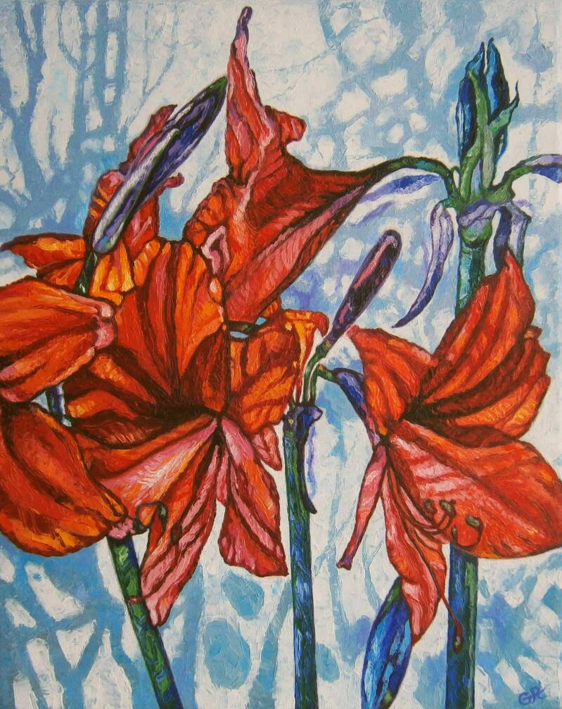 Amaryllis in January