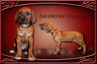 excellence-chacha-01.jpg