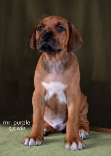 mr-purple-55-wks-kopMedium.jpg