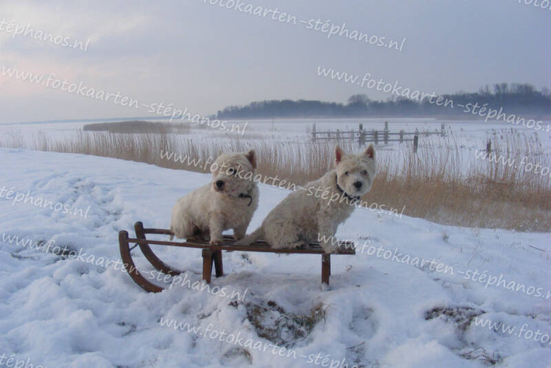 Kerst & Winter - Blanco winter 014