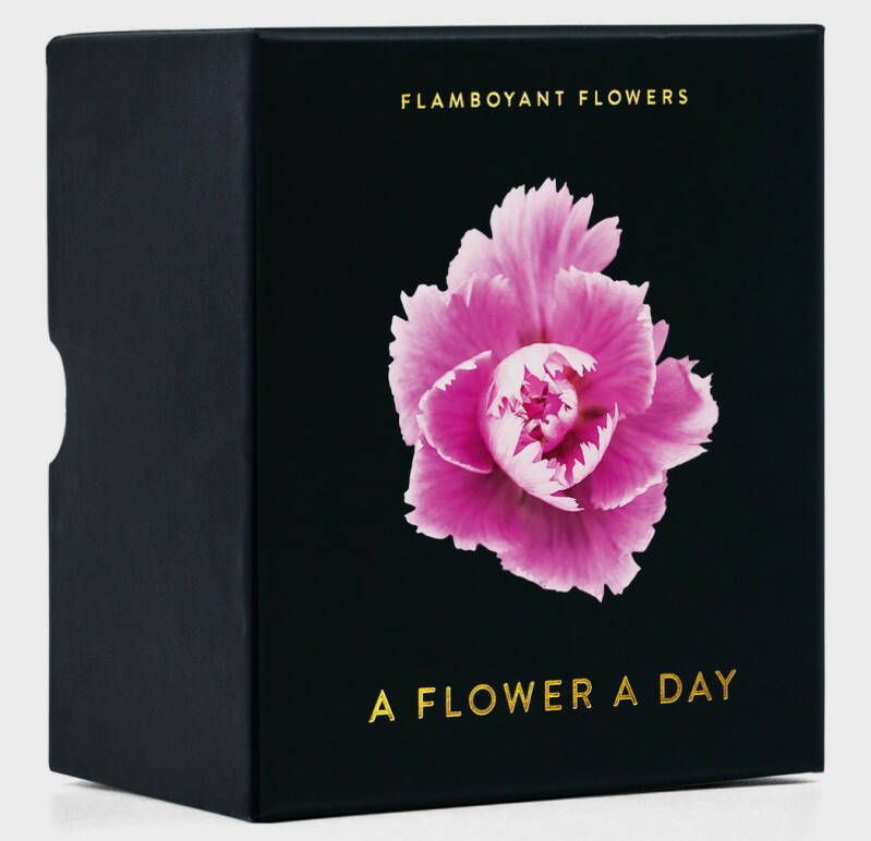 A flower a day -Flamboyant Flowers