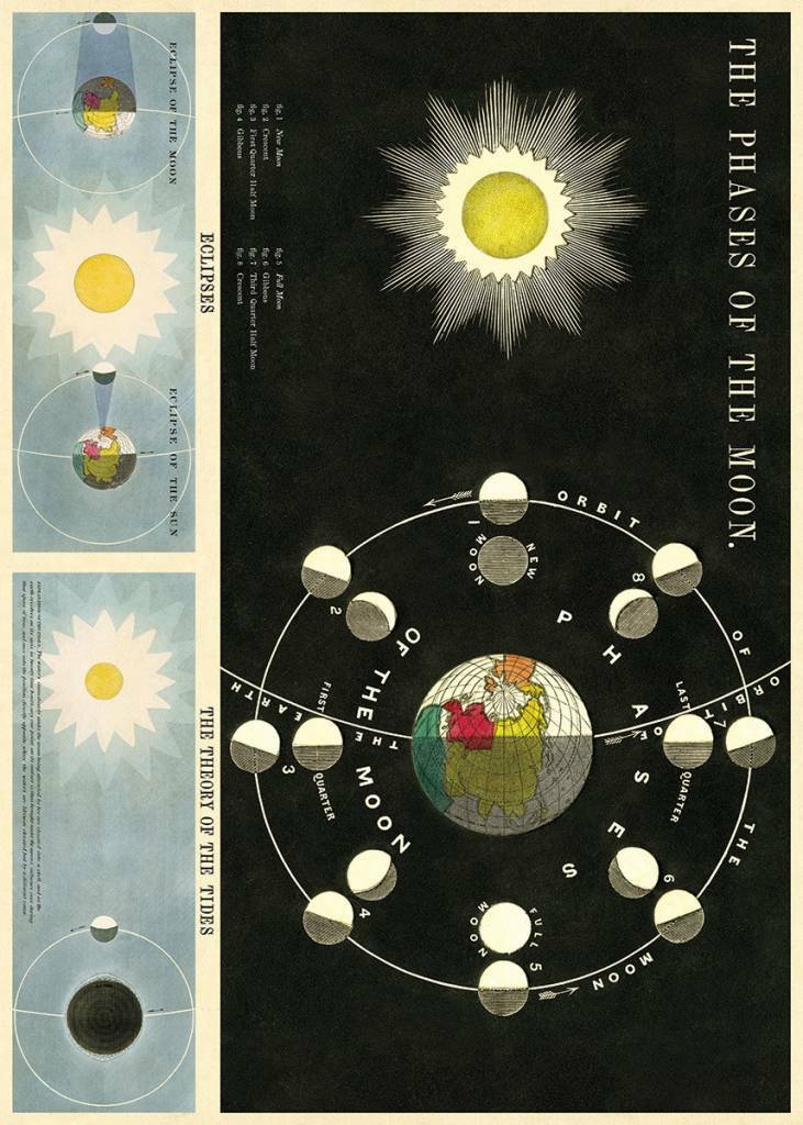 Poster The phases of the moon - Vintage Schoolplaat