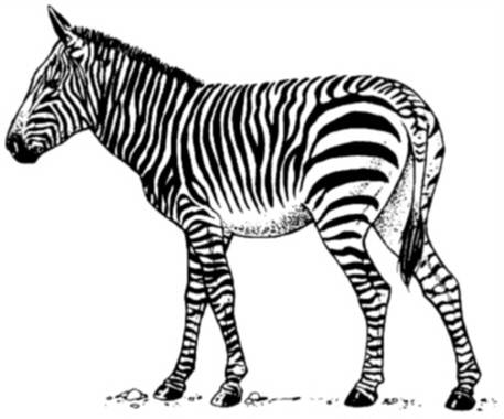 SW K06039/31 Walking zebra