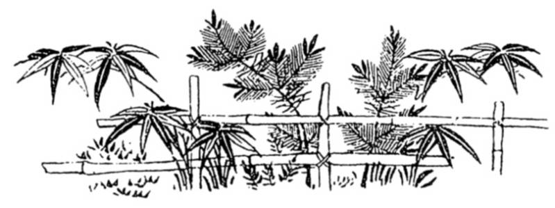 SW K06164/49 Bamboo gardenfence