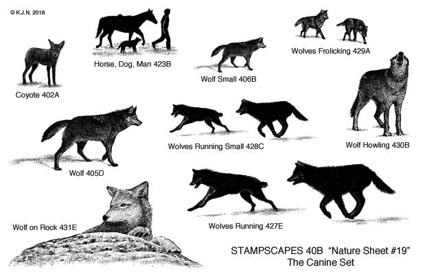 40B-UM Nature UM sheet 19 The canine set