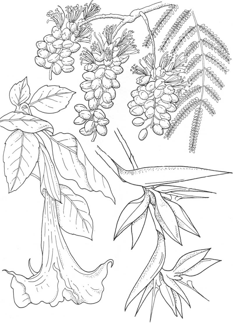 PLATESW102 Plate 102 Exotic flowers 1