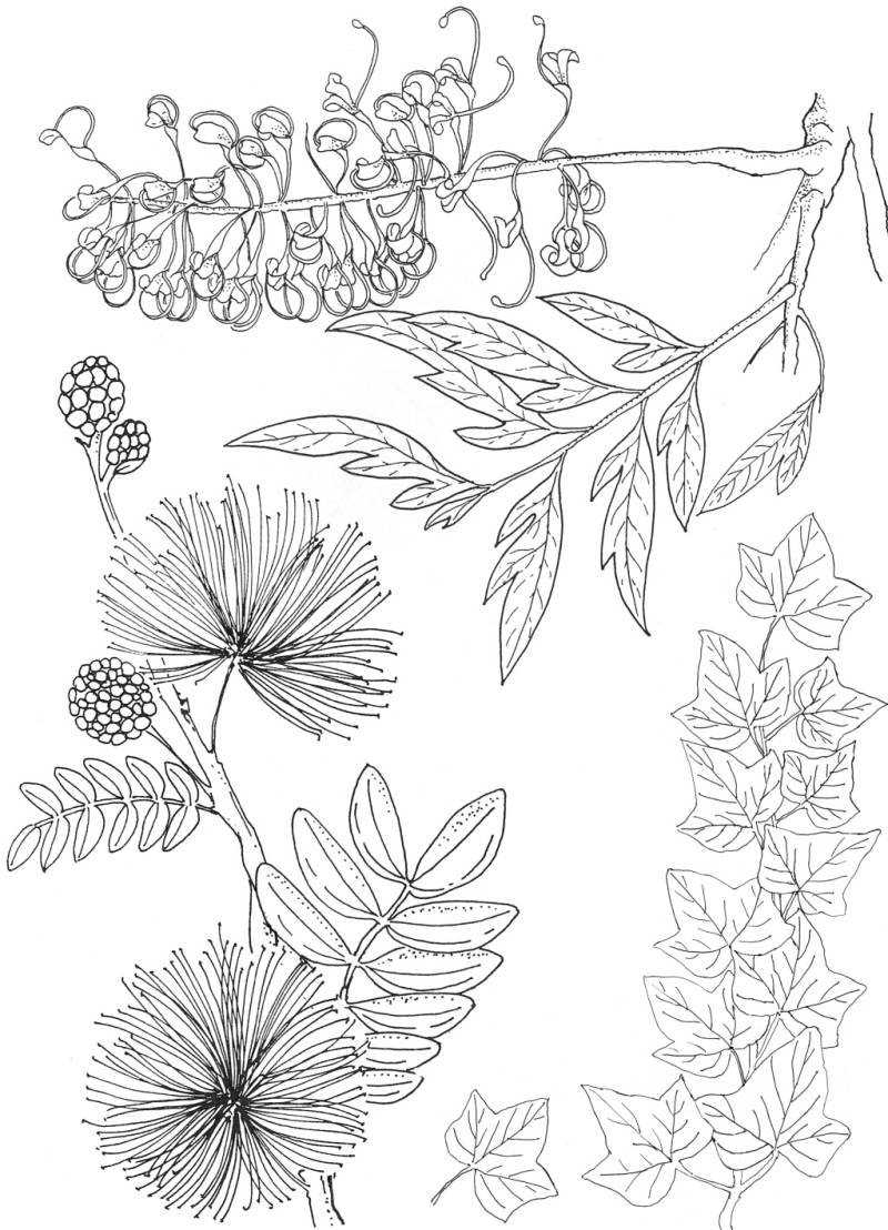 PLATESW103  Plate 103 Exotic flowers 2
