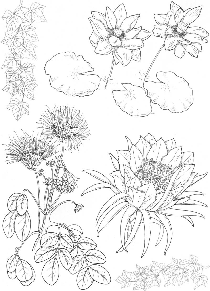 PLATESW104 Plate 104 Exotic flowers 3