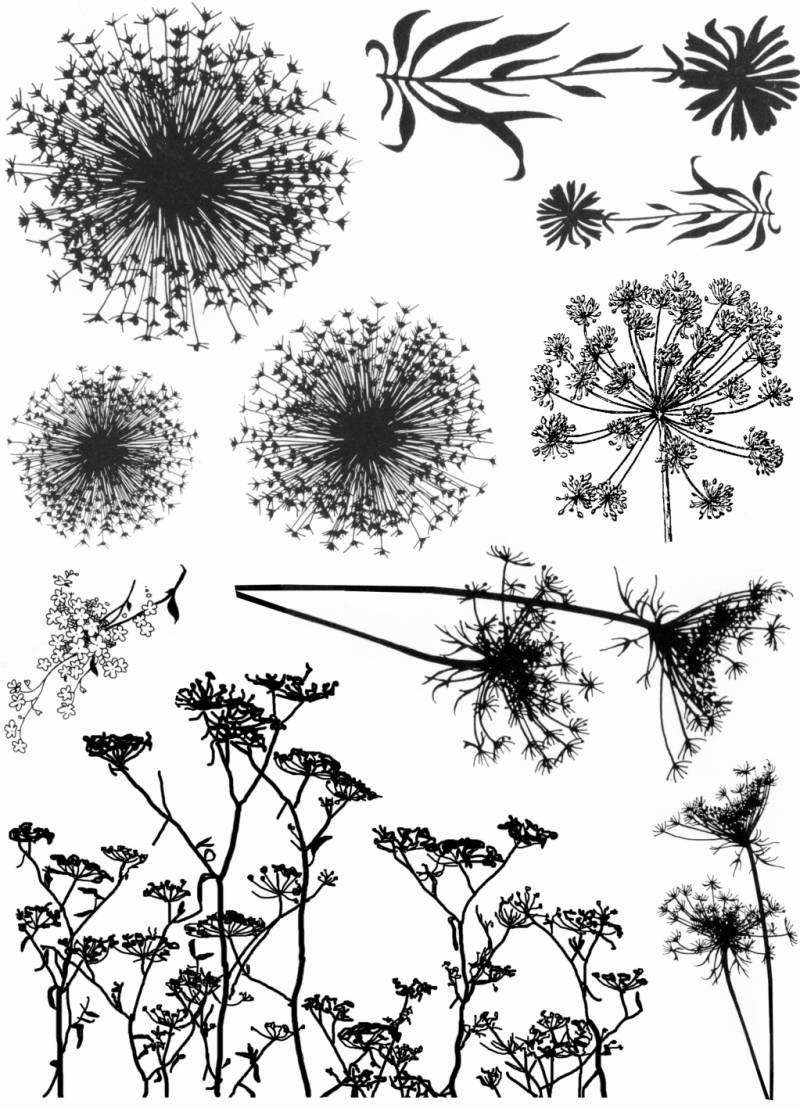 NSPL106 Plate 106 Flower silhouettes 2